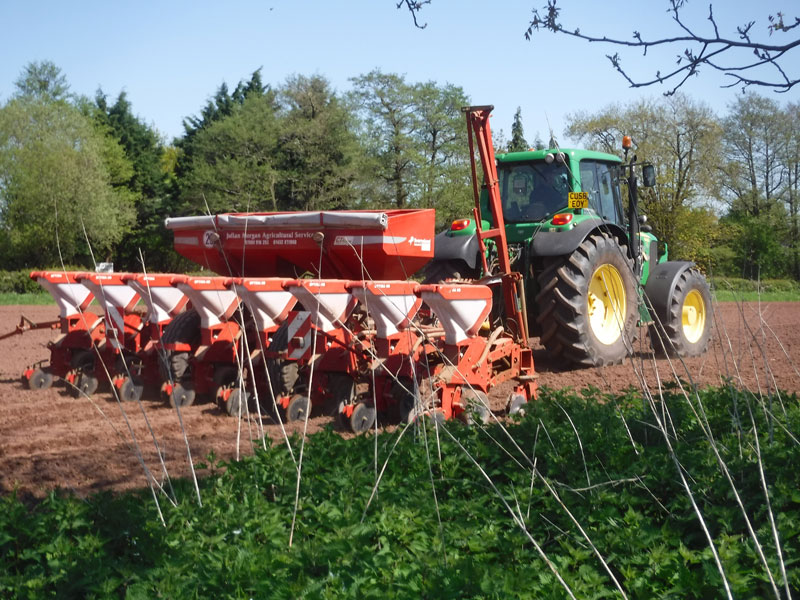 Maze preparation 2021- drilling in the seed.