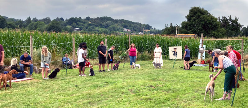 A photo showing dods at It's a Dog's Day at Elton Mazes